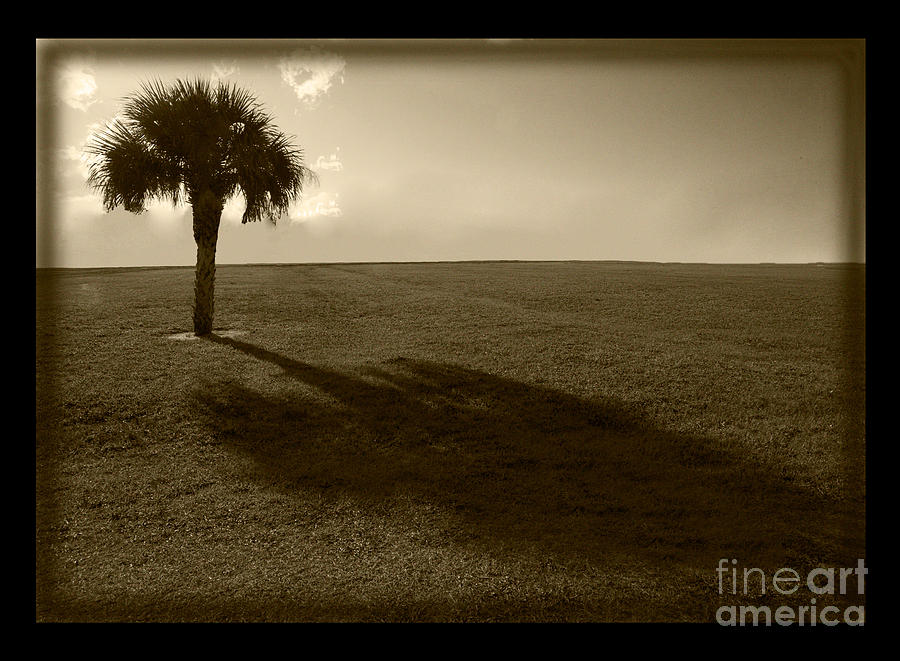 Tree Photograph  - Tree Fine Art Print