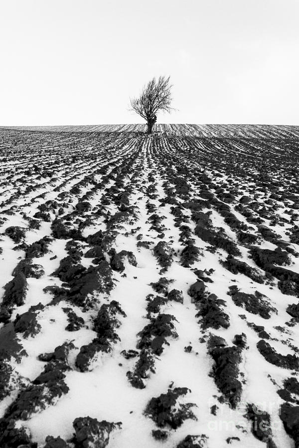 Tree In Snow Photograph