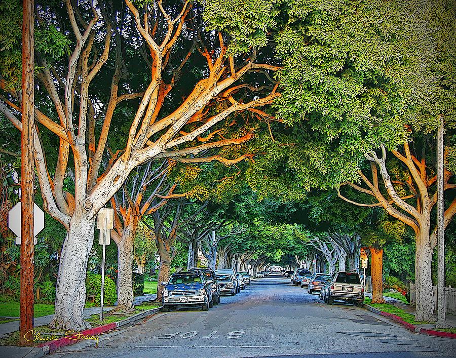 Tree Lined Street Photograph