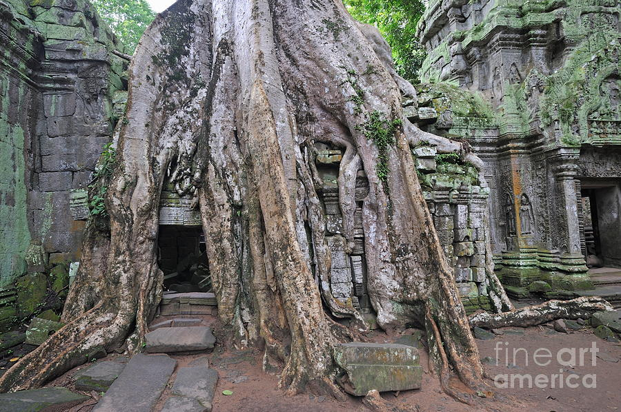 Tree Roots On Ruins At Angkor Wat Photograph