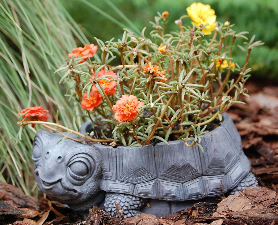Turtle Planter graph by Candy L Hill