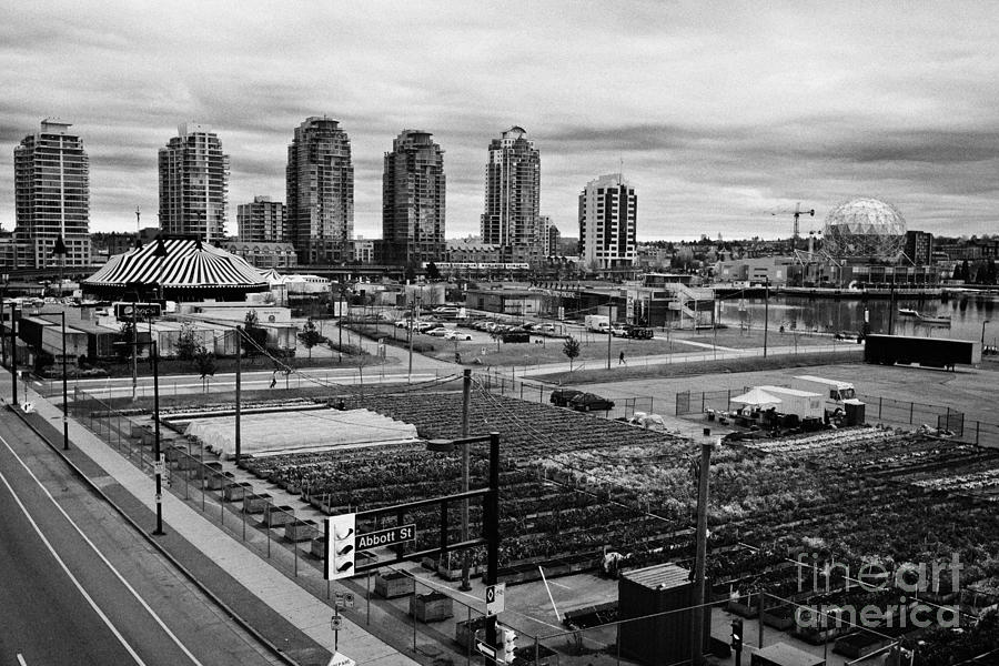urban farm on unused lot at concord pacific place at false creek Vancouver BC Canada Photograph
