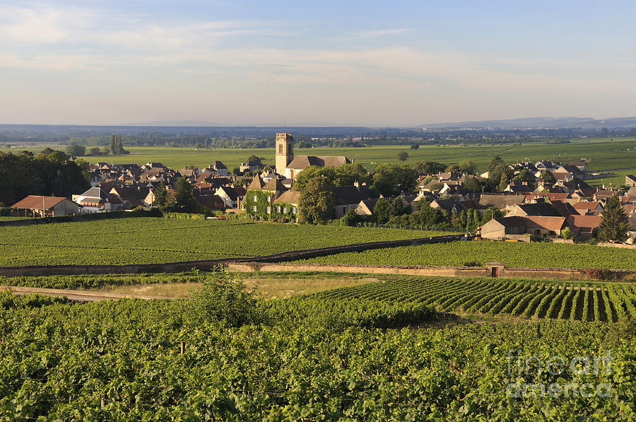 Vineyard And Village Of Pommard. Cote Dor. Route Des Grands Crus. Burgundy. France. Europe Photograph  - Vineyard And Village Of Pommard. Cote Dor. Route Des Grands Crus. Burgundy. France. Europe Fine Art Print