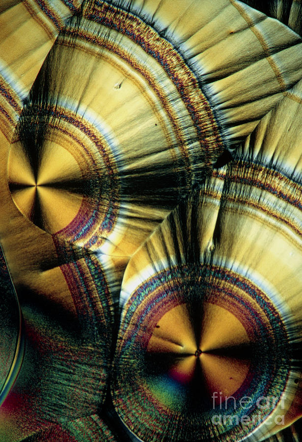 Vitamin C Crystals Photograph