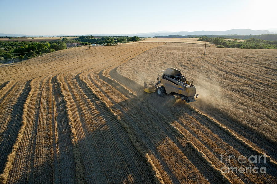Wheat Harvest In Provence Photograph