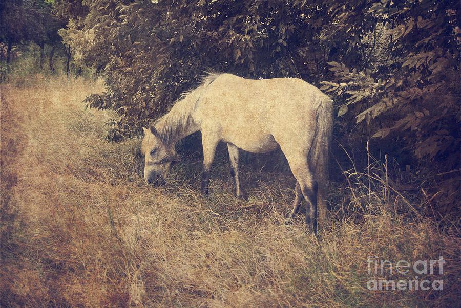 Horse Pyrography - White Horse by Jelena Jovanovic