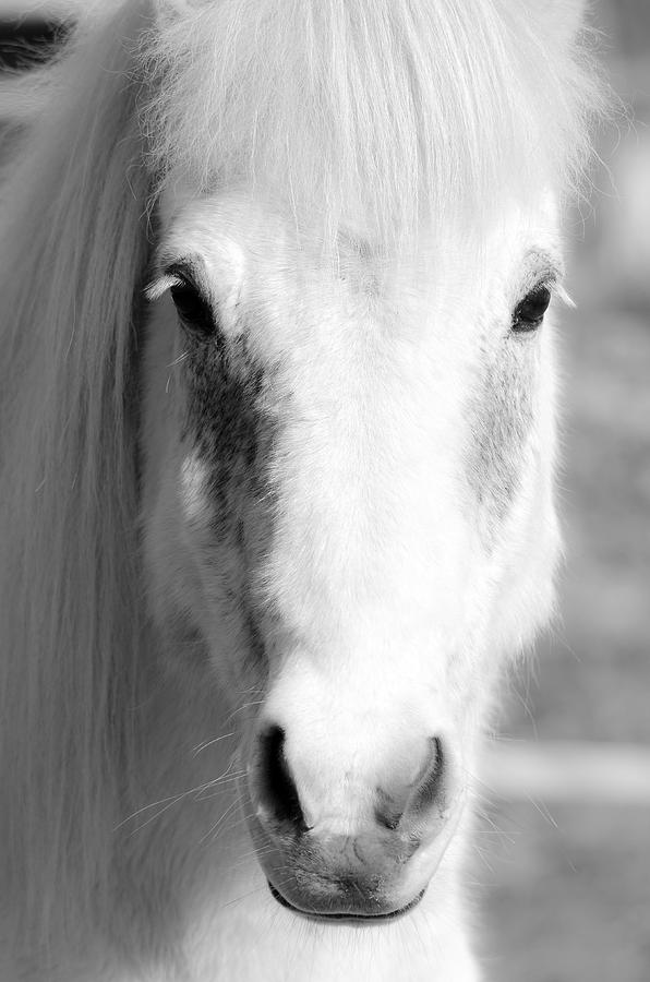 White Photograph - White Horse  by Toppart Sweden