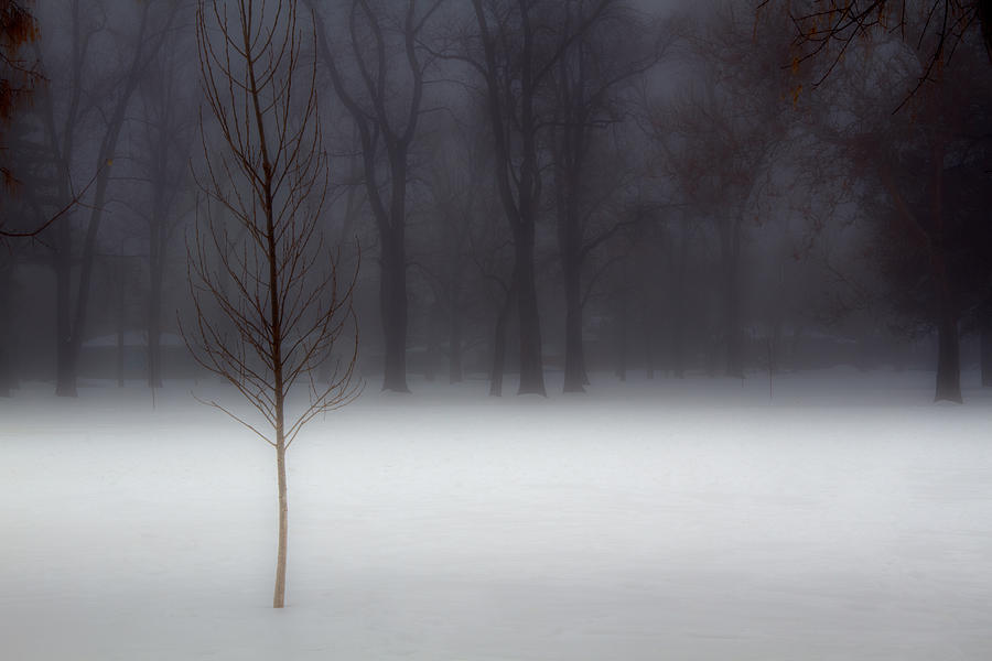 Winter In The Park Photograph  - Winter In The Park Fine Art Print