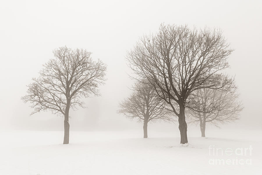 Winter Trees In Fog Photograph  - Winter Trees In Fog Fine Art Print