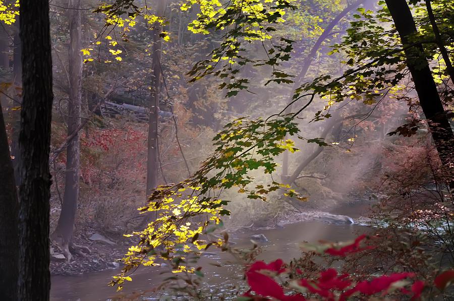 Wissahickon Autumn Photograph