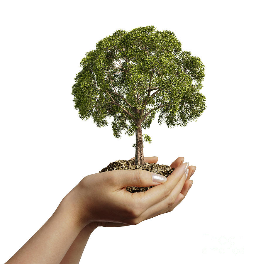 Womans Hands Holding Soil With A Tree Digital Art  - Womans Hands Holding Soil With A Tree Fine Art Print
