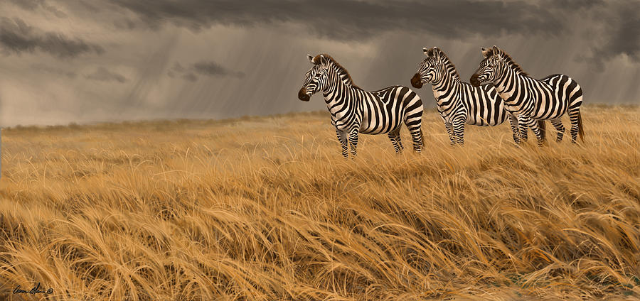 Zebra Trio Digital Art