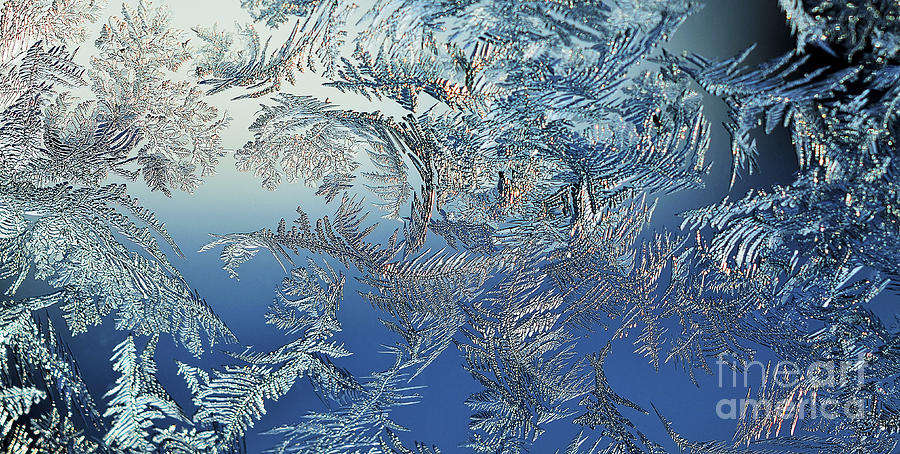 Frost On A Windowpane Photograph  - Frost On A Windowpane Fine Art Print