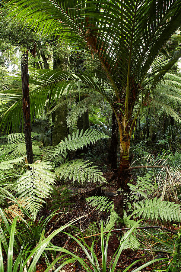 Jungle Photograph