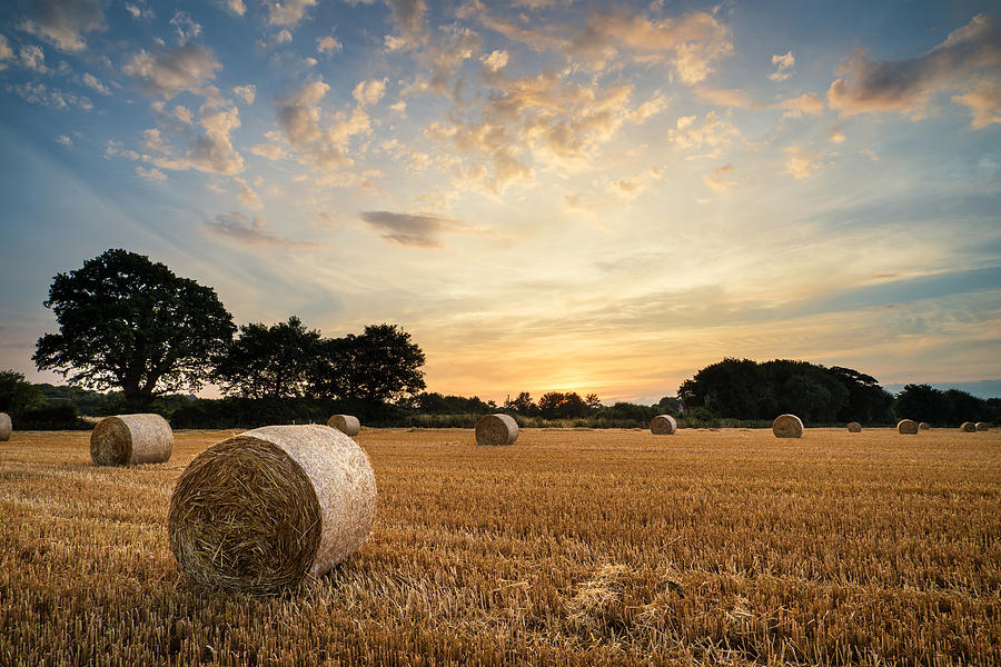 Art Photograph - Stunning Summer Landscape Of Hay Bales In Field At Sunset by Matthew Gibson