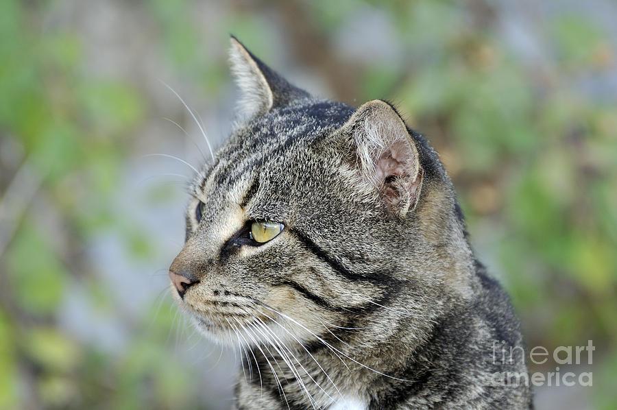 Cat In Hydra Island Photograph