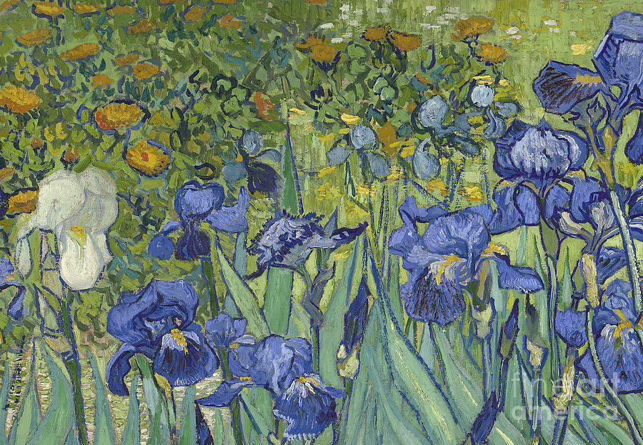 irises of vincent van gogh essay