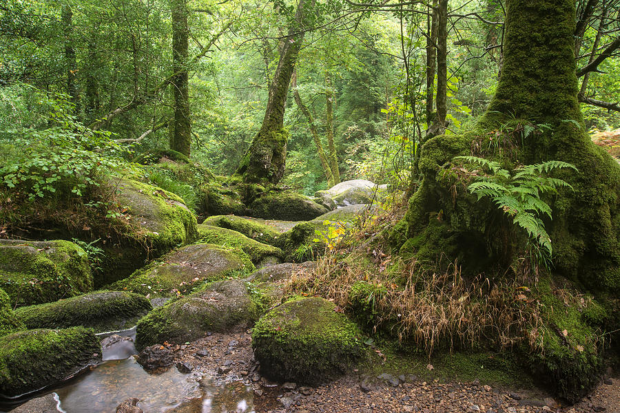 Landscape Of Becky Falls Waterfall In Dartmoor National Park Eng Photograph