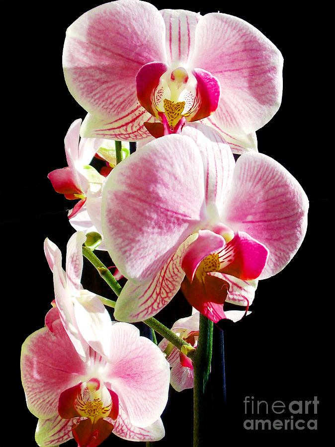 1404-beautiful Orchid Photograph
