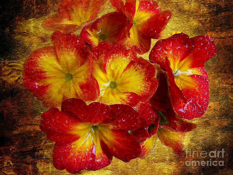 1414-red Flowers Photograph