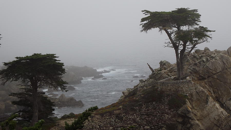 17 Mile Drive.  Monterey Cypress Tree Photograph - 17 Mile Drive Cypress Tree by Linda Aiassa