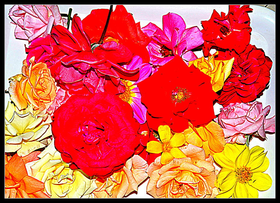 Flowers Flowers And Flowers Photograph  - Flowers Flowers And Flowers Fine Art Print