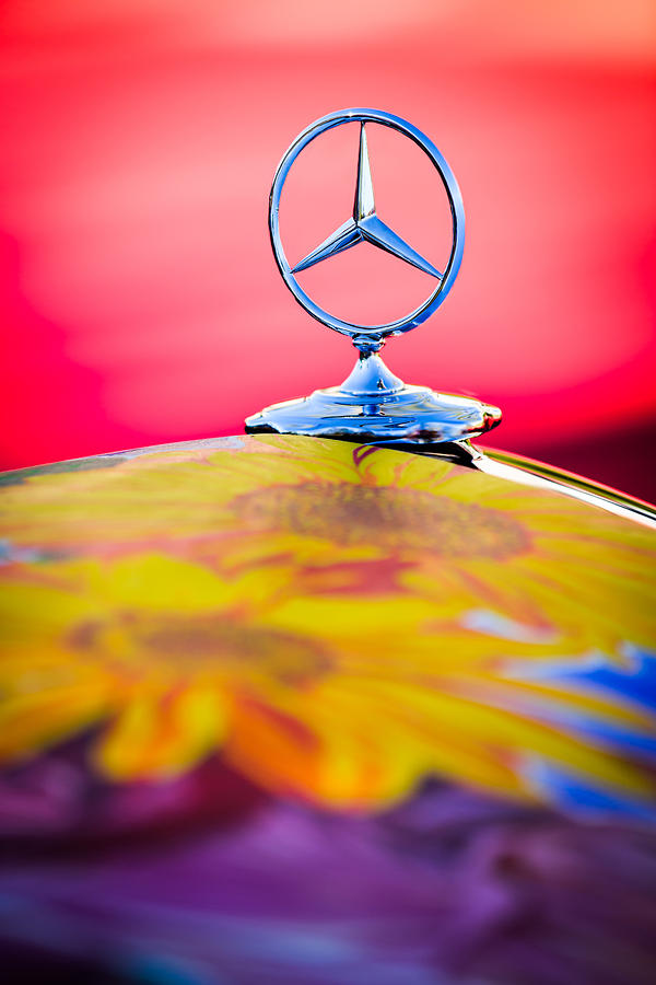 1952 Mercedes-benz 220 A Cabriolet earthly Paradise Hood Ornament Photograph - 1952 Mercedes-benz 220 A Cabriolet Hood Ornament by Jill Reger