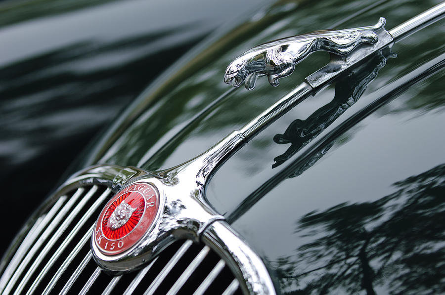 1955 Jaguar Xk 150 Hood Ornament  Photograph  - 1955 Jaguar Xk 150 Hood Ornament  Fine Art Print