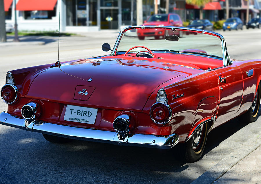 Classic Photograph - 1955 T-bird by Laura Fasulo