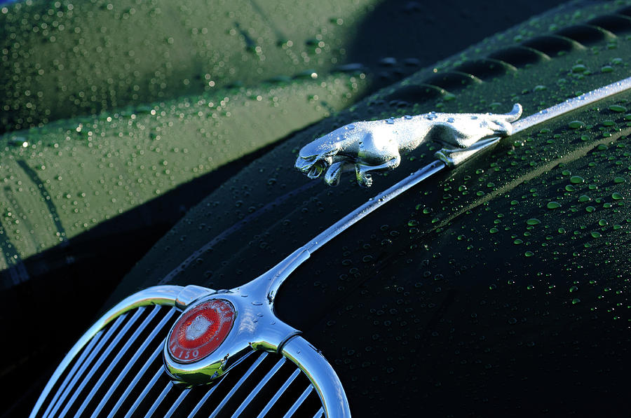 1960 Jaguar Xk 150s Fhc Hood Ornament Photograph  - 1960 Jaguar Xk 150s Fhc Hood Ornament Fine Art Print