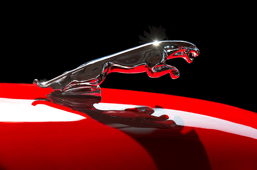 1961 Jaguar Kougar Hood Ornament Photograph  - 1961 Jaguar Kougar Hood Ornament Fine Art Print
