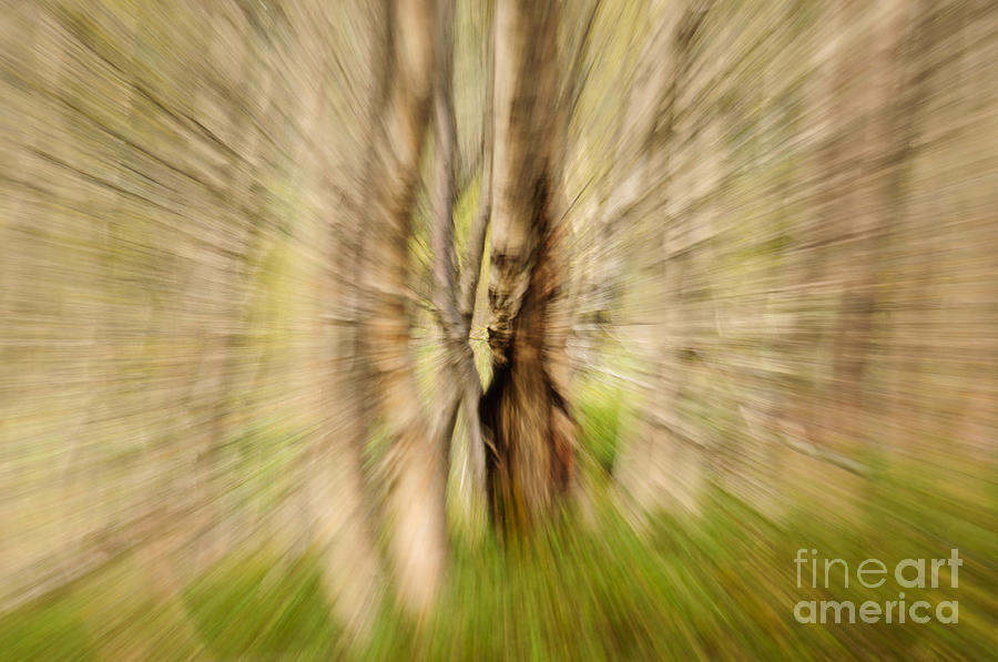 Abstract Forest Scenery  Photograph  - Abstract Forest Scenery  Fine Art Print