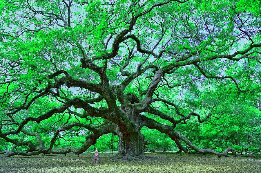 Angel Oak Photograph