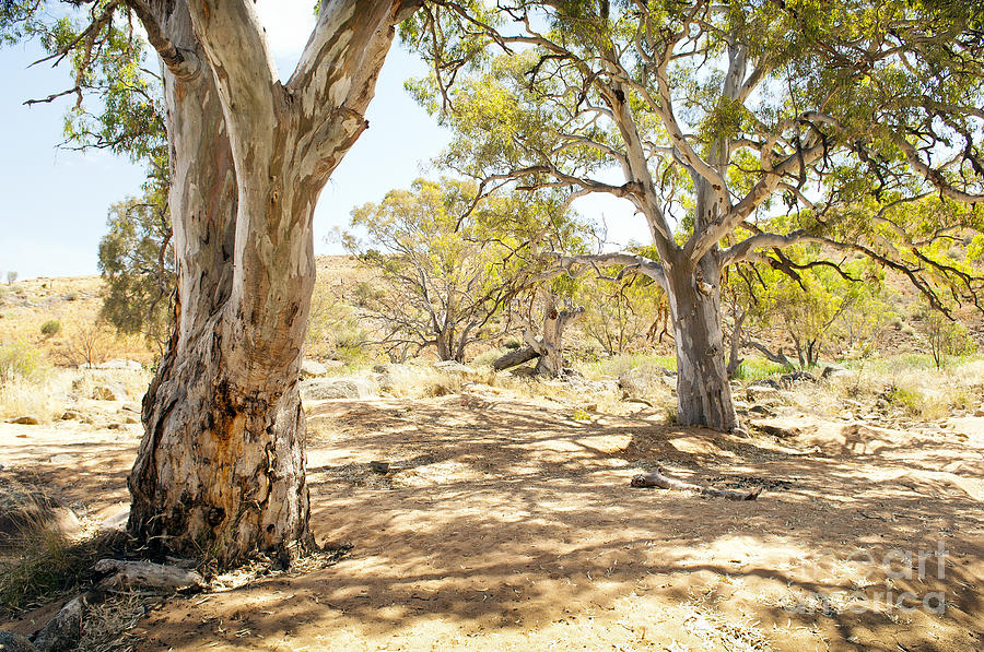 Australian Outback Oasis Photograph By Tim Hester