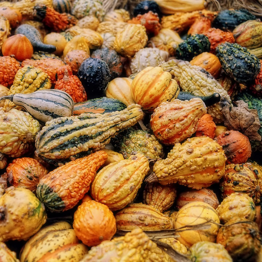Autumn Gourds Photograph  - Autumn Gourds Fine Art Print