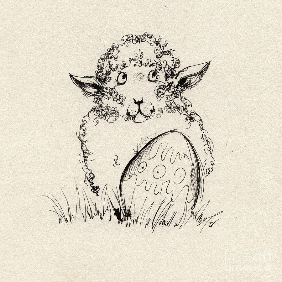 Sheep Drawing - Baa Baa by Angel  Tarantella