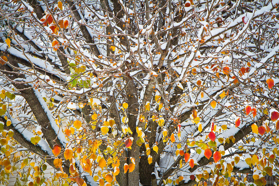 Nature Photograph - Battle Of The Seasons by Annette Hugen