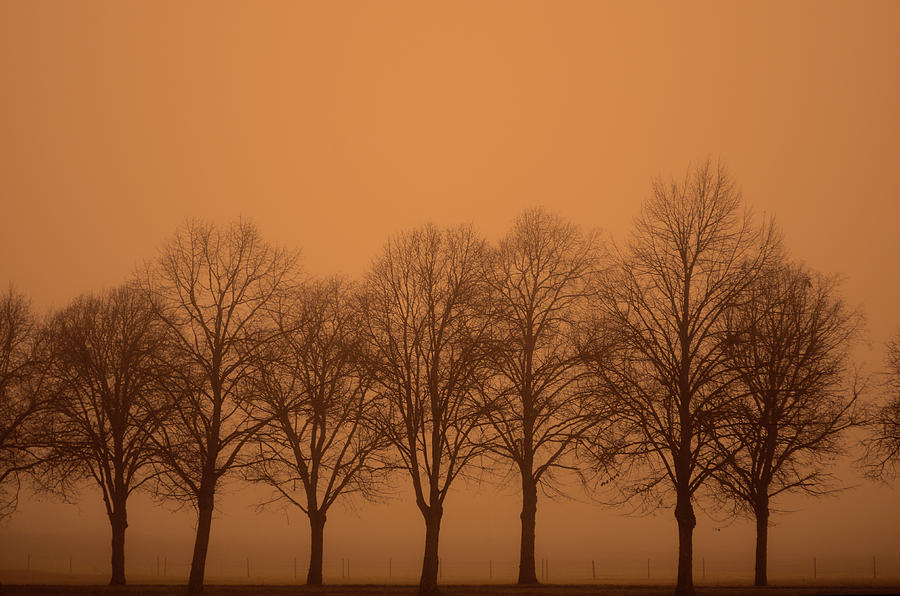Beautiful Trees In The Fall Photograph