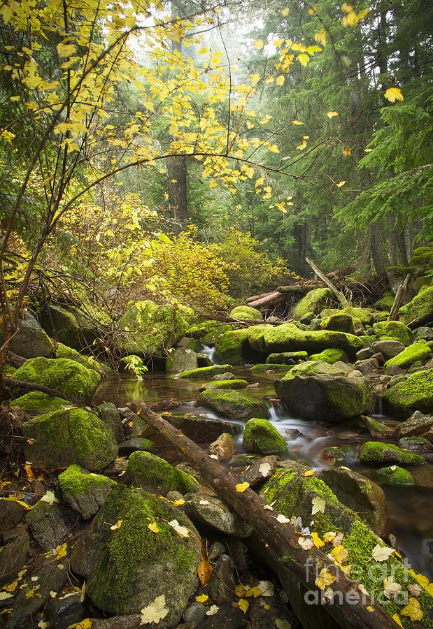 Beauty Creek Photograph
