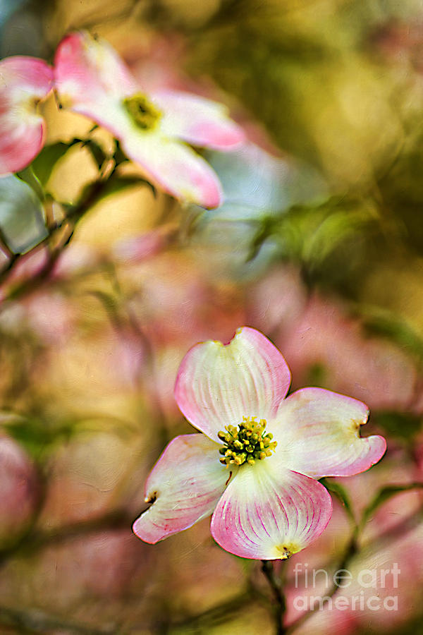 April Photograph - Blooms Of Spring by Darren Fisher