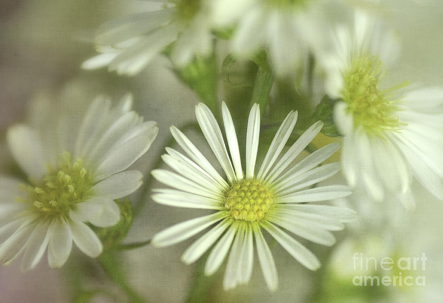 Bouquet Of White And Green Photograph