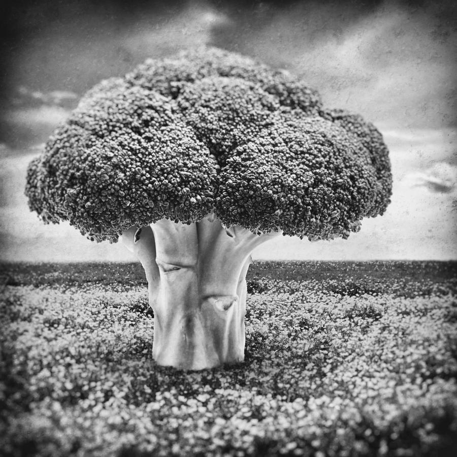 Broccoli Tree Photograph
