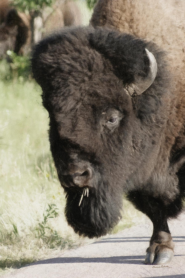 Buffalo Painterly Digital Art  - Buffalo Painterly Fine Art Print