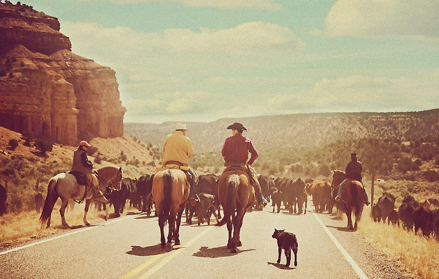 Cattle Call Photograph