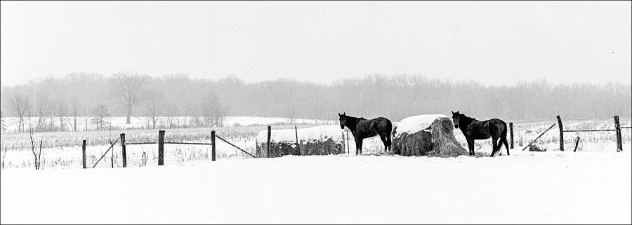 Cold Stare Photograph