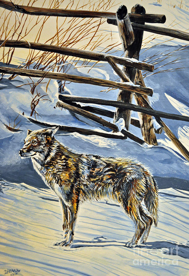 Coyote Cold Painting  - Coyote Cold Fine Art Print