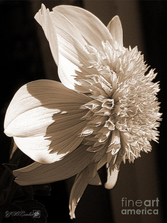 Dahlia Named Platinum Blonde Digital Art  - Dahlia Named Platinum Blonde Fine Art Print