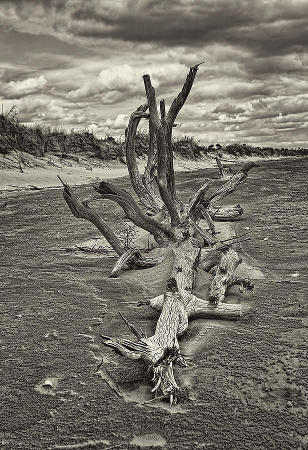 Nature Photograph - Desolate by Marcia Colelli