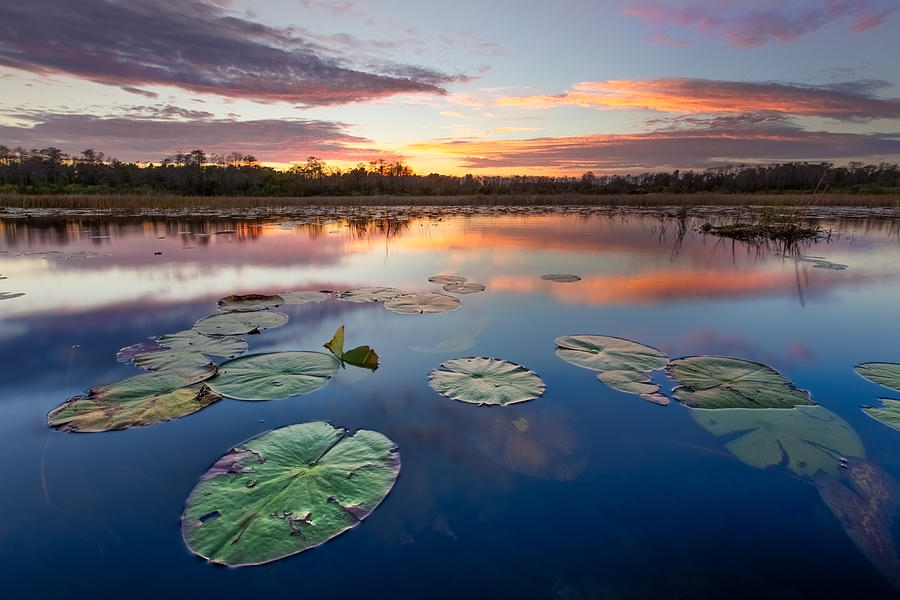 Clouds Photograph - Everglades At Sunset by Debra and Dave Vanderlaan