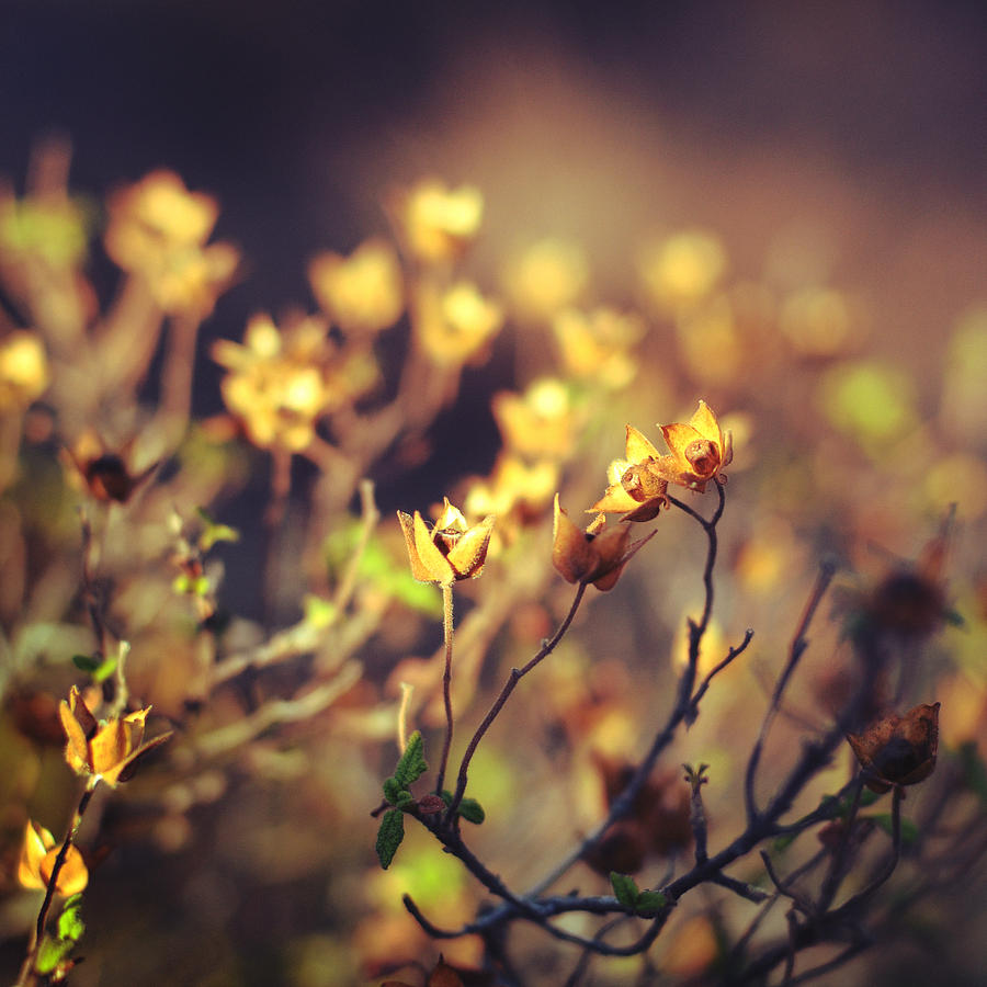 Floral Photograph - Every Desire by Taylan Soyturk